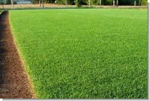 Perennial Ryegrass Seed 5 Lbs